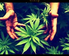 Droghe e studenti, il rapporto Espad Italia conferma il primato della cannabis