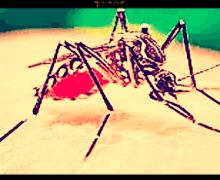 Malaria, isolati in Svizzera nuovi anticorpi che bloccano la malattia