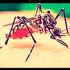 zanzara zika 760
