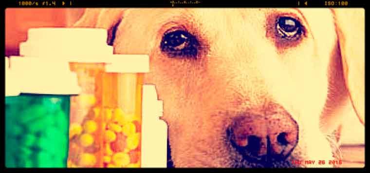 Nasce il Banco farmaceutico veterinario, Lav in piazza contro il caro-farmaci per gli animali