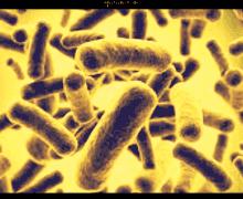 Scoperti negli USA 221 batteri da incubo, resistono a tutti gli antibiotici disponibili