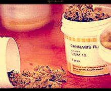 """Cannabis, una """"chimera"""" per i pazienti con dolore cronico, a Roma parte nuovo servizio"""