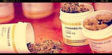 """Cannabis terapeutica, aumenta import da Olanda. Grillo: """"Prima risposta ai pazienti"""""""