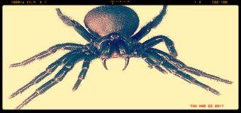 La speranza contro l'ictus? Arriva dal ragno più velenoso al mondo