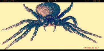 ictus ragno 760