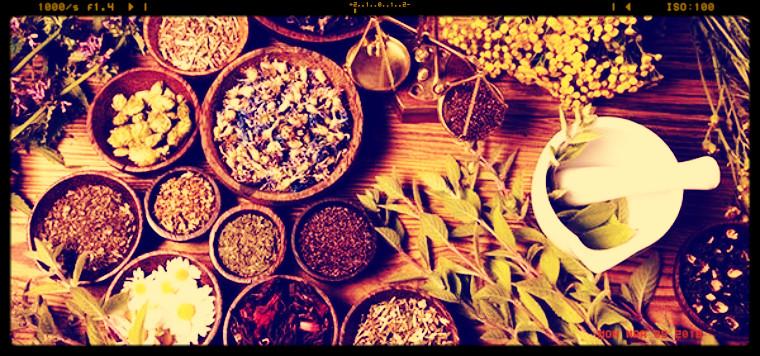 Approvato ieri dal Governo il Testo unico delle piante officinali