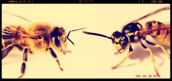 """Allergie da punture di api e vespe,  gli esperti: """"Poco note le terapie"""""""
