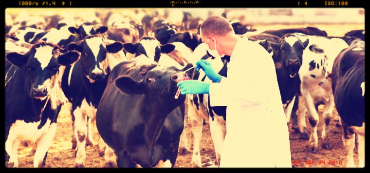 Medicinali veterinari, in calo le vendite di antimicrobici in Italia