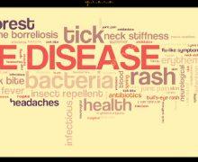 """Da Gimbe, linee guida per la malattia di Lyme: """"conoscerla per riconoscerla"""""""