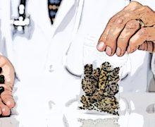 Roma, Ecm sull'uso medico della cannabis per MMG e farmacisti