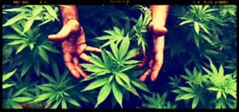 Cannabis per uso medico, Epicentro-Iss  segnala 18 reazioni avverse in due anni
