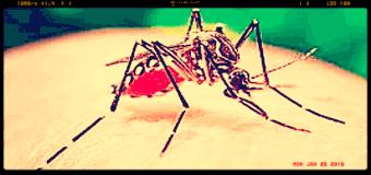 Un comune vermifugo sembra  in grado di bloccare il virus Zika