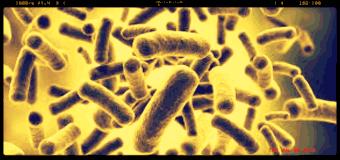 Germania, isolato batterio nel microbiota, potrebbe portare a nuovo super-antibiotico