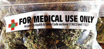 Cannabis, il Parlamento europeo invita gli Stati a considerarne l'uso medico