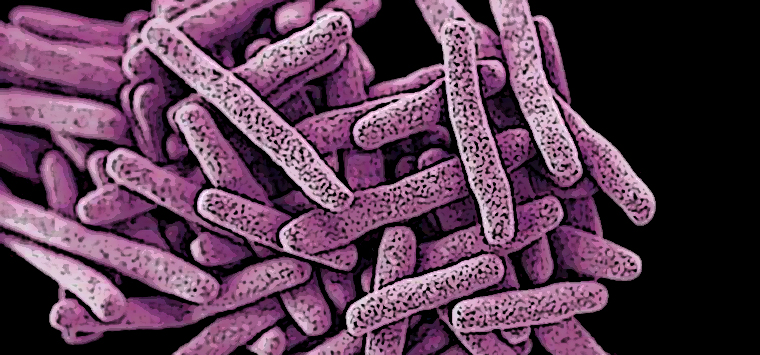Candida auris, il fungo che resiste a tutto rischia di diventare un allarme globale