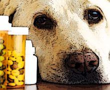 """Cancellotti (Unaftisp): """"Perchè ai veterinari è consentito di fare i farmacisti""""?"""