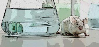 Metodi alternativi alla ricerca con animali, insediato al ministero il gruppo di lavoro