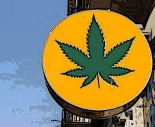 """Coldiretti: """"Cannabis, il legislatore chiarisca definitivamente"""""""