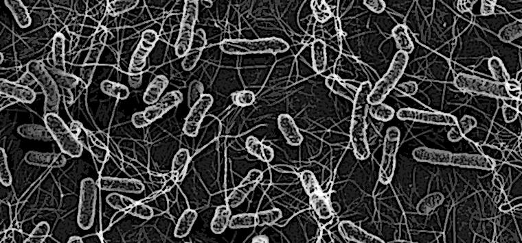 Brutta notizia: la resistenza agli antibiotici si diffonde anche… senza antibiotici