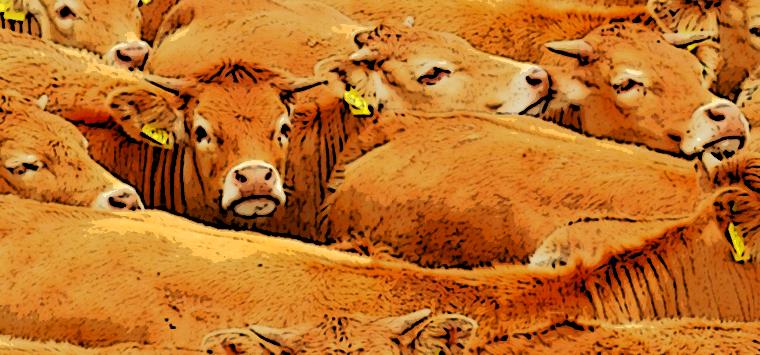 Report Ema, in calo in Europa l'uso degli antibiotici sugli animali