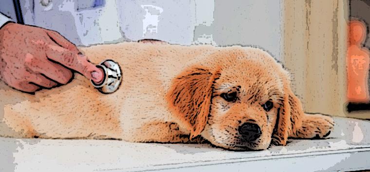 Firmato il decreto, ora è possibile curare gli animali con farmaci per uso umano